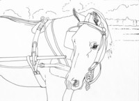 line drawing of a horse by Lanie Frick